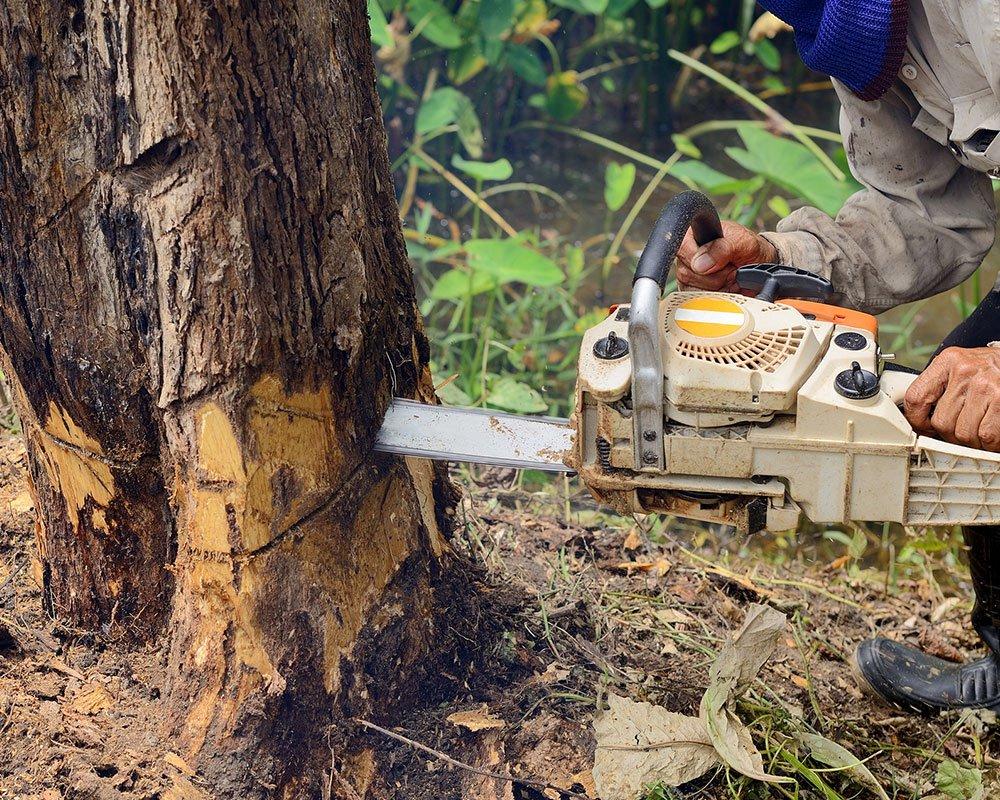 Tree Service Memphis - Tree Removal