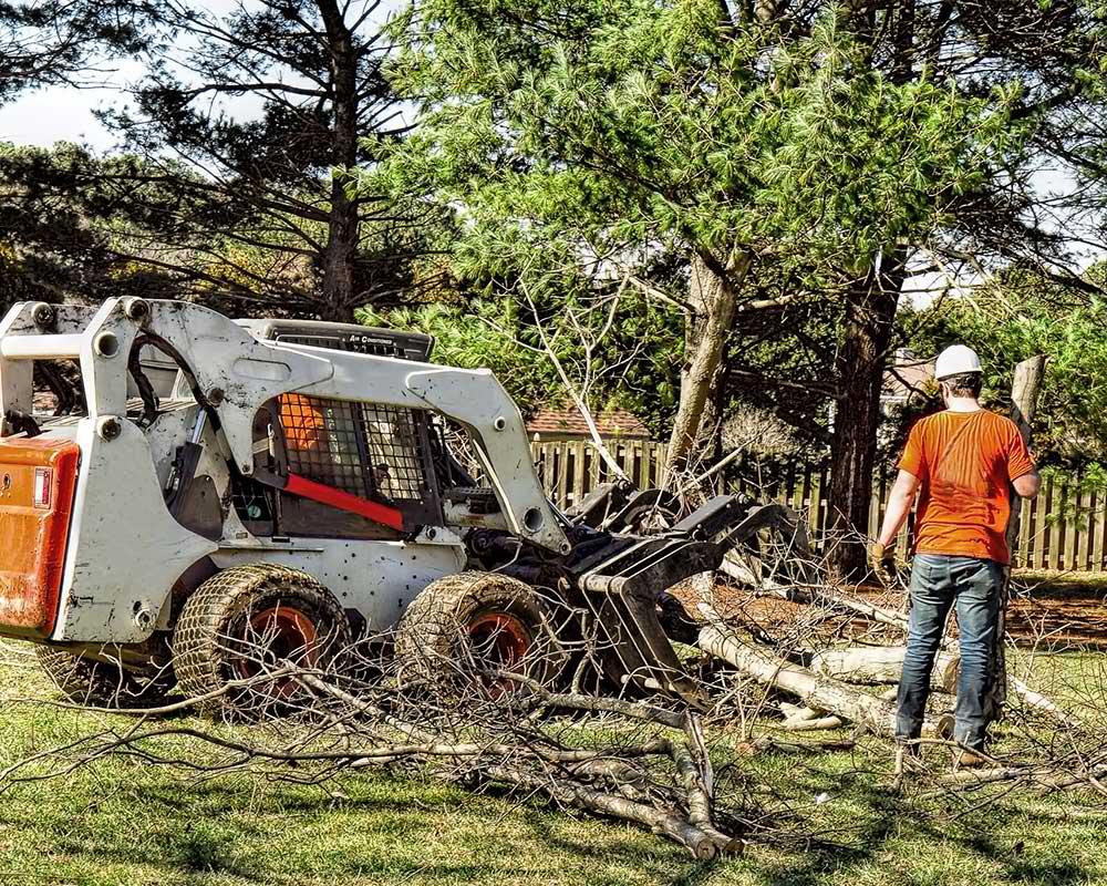 Tree Service Memphis - Arborist