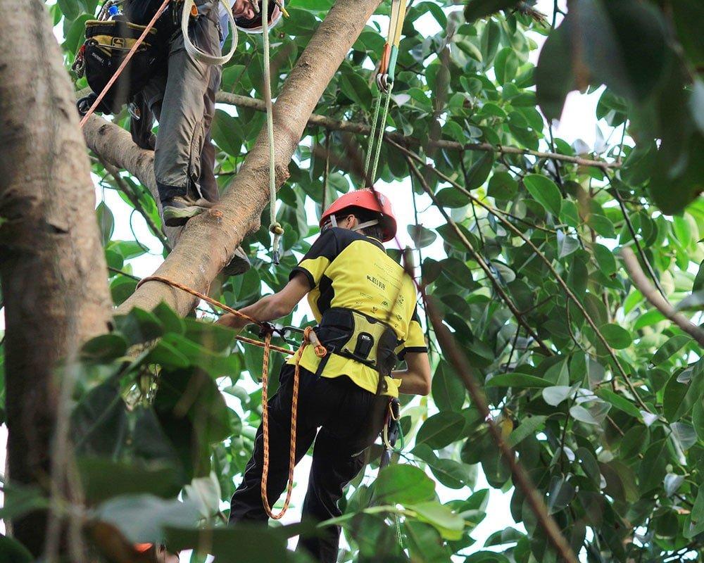 Tree Service Memphis - Emergency Tree Removal