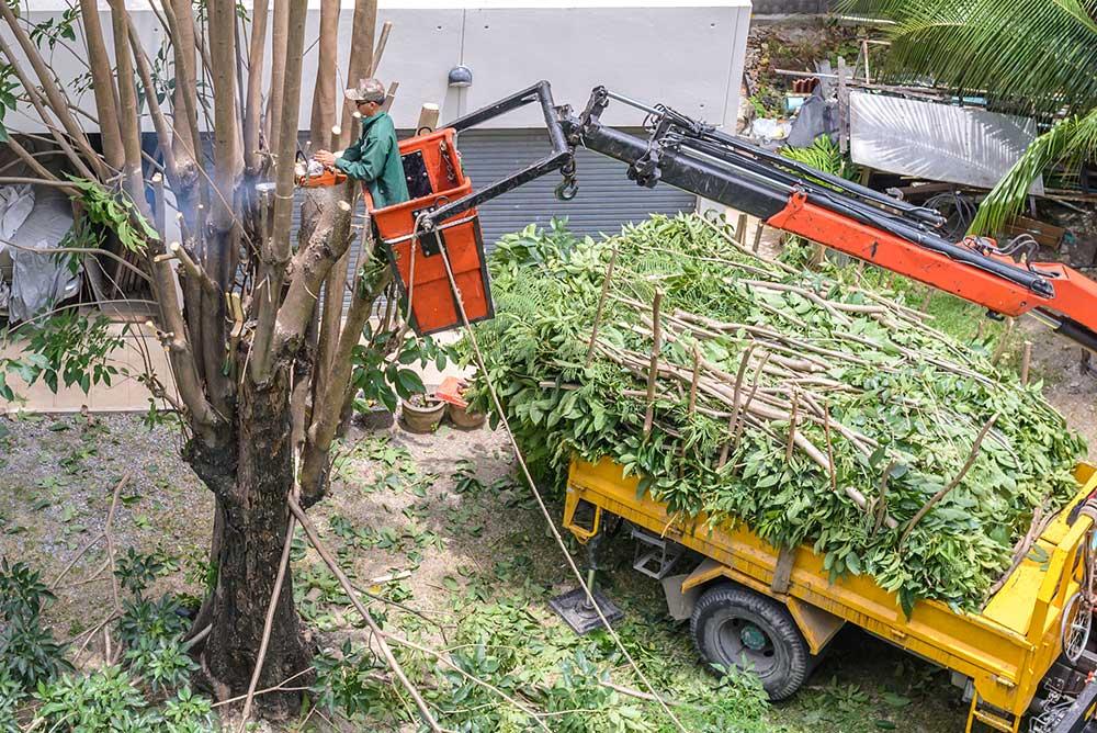Tree Service Memphis - Tree Pruning