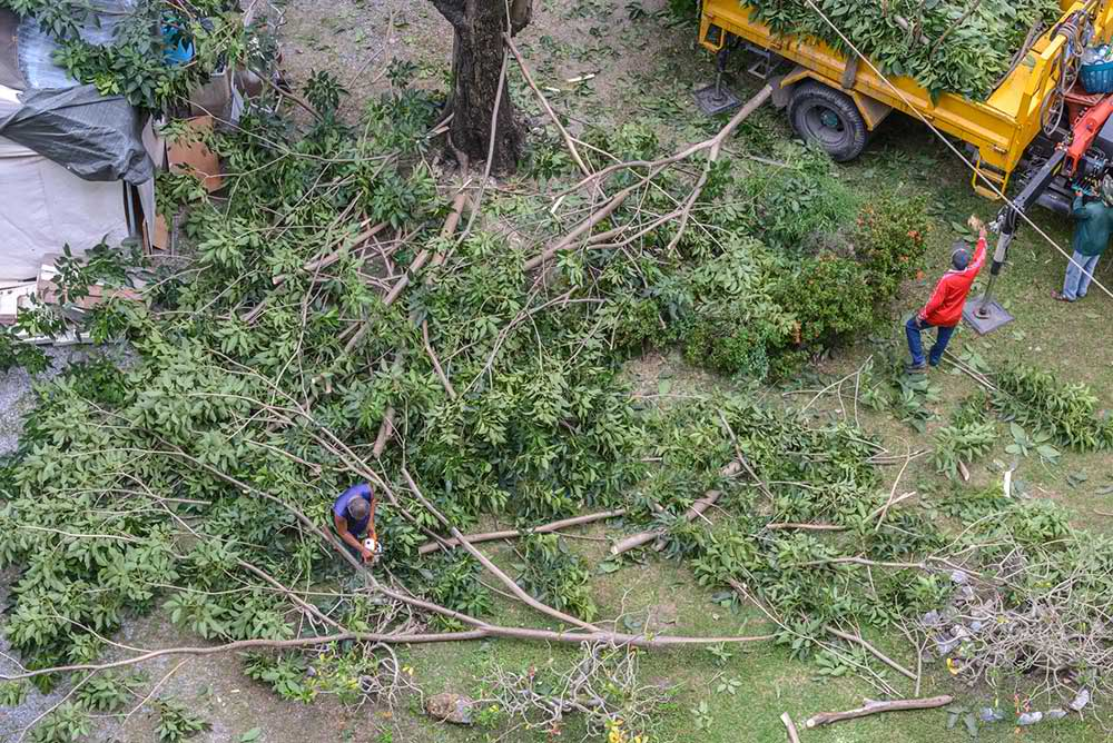 Tree Service Memphis - Tree Trimming